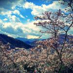 お花見の穴場!? 富士山と桜のベストショットも楽しめるお花見登山してみました @岩殿山
