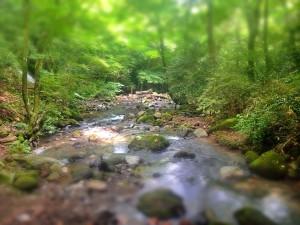 千条の滝から鷹巣山へ