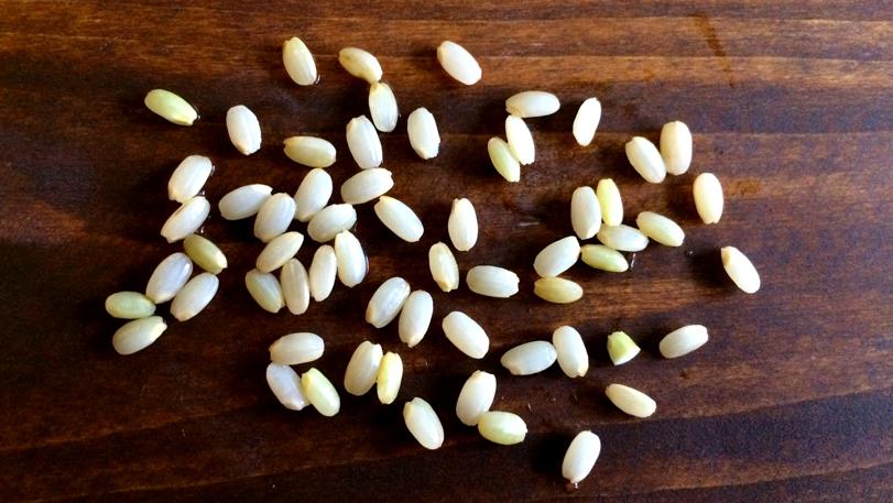 酵素玄米の効果をご紹介。作り方や実体験効果も