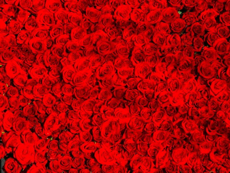 本数 意味 薔薇